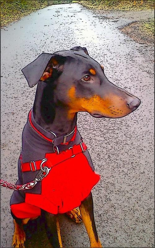 watchdog-at-shades1
