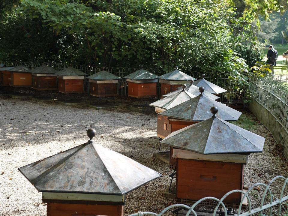 paris-beehives